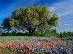 Texas_ilkbahar_manzara